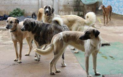 El Ayuntamiento de Zafra instalará un núcleo zoológico para menos de 10 animales en la Huerta Blanco